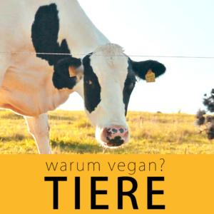 warum vegan? Tiere | kohlundkarma