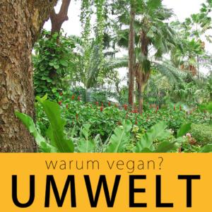 warum vegan? Umwelt | kohlundkarma